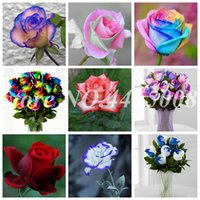 500 adet Tohumları Nadir Mul-Renk Gül Şaşırtıcı Güzel Kapalı Gökkuşağı Güller Bahçe Dekor Bonsai Çiçek Saksı Bitkileri Dikim Kolay Büyümek