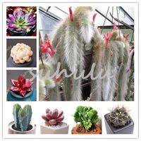 2000 PCS Stapelia Pulchella Bonsai Lithops Mix Succulents Fröer Raw Stone Cactus Plant Sällsynt för Home Garden Flower Bonsai Växter