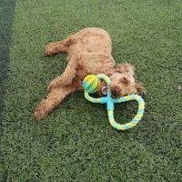 bola de borracha corda de algodão brinquedo do cão novo recheado com suprimentos para animais resistentes a mordida sabedoria lanches brinquedos interativos limpeza dos dentes
