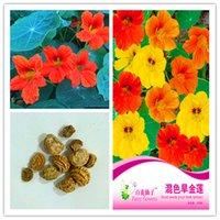 1 개 팩 원래 패키지 한련 한련 꽃 분재 식물 꽃 씨앗 가보 하디 다년생 한련 분재 식물 NO42