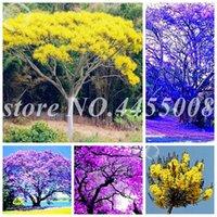 100 stücke samen selten jacaranda mimosifolia baum bonsai baum jacaranda blume pflanzen im garten immergrüner sträucher parteibraun pflanzen