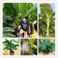 100 Pcs Seeds Dwarf Mini Banana Bonsai Tree Tropical Sweet Nutritious Food Fruit Balcony Flower For Home Plant Germination Rate 95% +