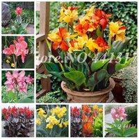 200 pezzi Semi Dwarf Bonsai Canna Lily Outdoor Tropical Bronze Scarlet Scarlet Fogliame Perenne Blooming Piante in vaso per la casa