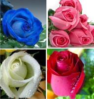 Renkli Gökkuşağı Mix Renk Kolay Büyüyen Çok Yıllık Çiçek Tohumları Bonsai Bloom Gül Tohumları 100 Parça Saksı Çiçek DIY Ev Bitki / Bahçe