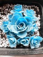 200 Stück Samen Seltene Sukkulenten Blau Bonsai Lotus Bonsaipflanzen Pseudotruncatella lebenden Gesteins seltene Sukkulenten pflanzen Home Garten