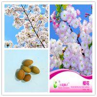 1 개 팩 원래 패키지 체리 화분 꽃 분재 식물 꽃 씨앗 핑크 하디 다년생 분재 공장 핫 판매 NO85 벚꽃