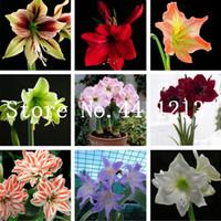 무료 배송 200 PC / 가방 진정한 아마 릴리스 꽃 전구 분재 식물 씨앗 꽃, Homegarden Barbados 릴리 꽃 냄비에 대 한 HippeAstrum