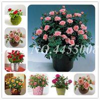 Продажа 200 шт Семена розы бонсай многолетние цветы розы крытый бонсай цветок розовое дерево ароматные вьющиеся растения для домашнего сада посадки