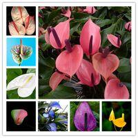 ホット販売 ! Anthurium Bonsai植物300個/バッグAnthurium植物種子、鉢植えフラワー盆栽植物多年生、多年生の開花常に