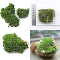 Hthome Home Party Decorazione Artificiale Green Green Moss Plant Ornamento Ornamento Impianti artificiali in miniatura