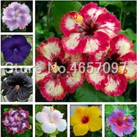 Vendite calde! 300 pezzi Giant Hibiscus Bonsai Fiori Bonsaias Semi Mix Color Hibiscus Tree Plating per fiori Piante in vaso Decorazione giardino