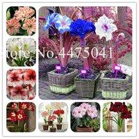 200 개 분재 공장 씨앗 아마 릴리스 식물, Hippeastrum 꽃 바베이도스 릴리 DIY 가정 정원 분재 발코니 꽃 야외 소설 재배