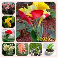 2020 뜨거운 판매 새로운 아리벨씨 크리스마스 식물 꽃 식물 선물,50Pc Canna bonsai DIY 화분에 심은 식물 실내 정원 꽃
