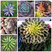 100 unids / bolsa Bonsai Flor Plant Agave Bonsai, raro suculento Bonsai Pérsis floreciente Pote de Agave Plantas para el hogar Decoración de jardín Semillas de flores
