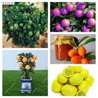 50 pezzi / sacchetto semi nani kumquat balcone patio bonsai succoso arancione frutta albero pianta all'aperto dolce citrus pianta per flower pot flanter