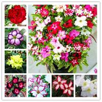 100% réel Origine Desert Rose Bonsai Plantes ornementales mixtes Balcon Fleurs DrawF pot Adenium obesum fleur Bonsai -5Pc / lot Graines