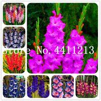 Mejor precio 200 unidades Diferentes perennes Gladiolus Flower Bonsai Plant Semillas, espada rara Lily Muy beautful Flower para plantar jardín Casa