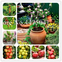 100PCS 애플 드워프 나무 분재 식물 씨앗은 이국적인 PLANTAS 과일 분재 나무 - 중국 레드 지 애플 분재 정원, 가정 및 정원 Plante 플로레스