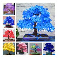 100 Stück Regenbogen Maple Bonsai-Baum-Pflanzen Seltene Japanischer Ahorn Bonsai Pflanzensamen, Bonsai Blumen Indoor Baum Pflanze Hausgarten 24 Arten Farben