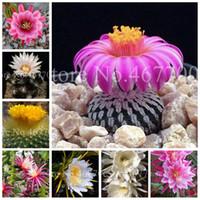 400 pcs graines rares cactus mixtes plantes en pierre crue litthops de cactus plantes bio jardin succulent bonsaï balcon plantation de fleurs