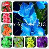100 unidades semillas de la planta perenne gladiolo flor Bonsai, rara espada flor del lirio para el jardín de DIY siembra en macetas plantas aeróbico decoración