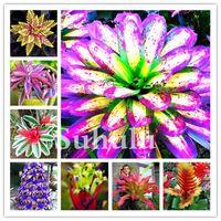 Envío 500 PCS Cactus Bromeliad Plantas Semillas Rare Colorful Flower Bonsai Courtyard Mini Suculent Bonsai DIY Home Jardín Semillas Planta