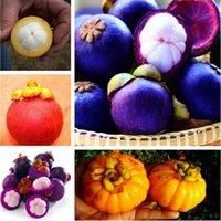 30 Teile / beutel Mangostanfrucht Mangostanfrucht Samen Bio Heirloom Obst Samen Baum Samen Nährstoffreiche Königin Der Tropischen Früchte