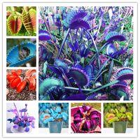 BONSAI 2000 PCS par sac Rare Flycatcher en pot de graines insectivores mixtes Bonsaï Plant Dionaea Muscipula Clip géant Vénus Flytrap Plantes