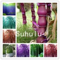 50 PC 대나무 분재 씨앗, 긴 모노 대나무, 쉽게 gaint phyllostachys pubescens 공장, 집 정원을위한 신선한 녹색 대나무 나무