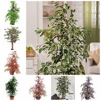 20 pcs Semillas Mini Ficus Bonsai Banyan Tree bosque de arbustos rápido cultivo de plantas de jardín Hogar crecimiento natural tropical Adornos Fácil Grow