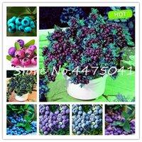 가정 및 정원 쉬운 성장 500 PC를 블루 베리 분재 식물 씨앗 달콤한 실내 과일 나무 하이 부시 블루 베리 DIY의 Countyard 분재 식물