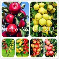 Cire Apple Fruit Arbre 50 pcs Délicieux Bonsaï de fruits non GMO plantes de plante de la plante comestible Home Jardin Tree Pots Senior Patio Plantes Cadeau Livraison Gratuite