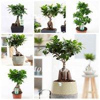 30 PC Semillas china rara Ficus Microcarpa Bonsai árbol de hoja perenne Bonsai en maceta Ginseng Banyan Inicio de Jardín Plantas fáciles de cultivar