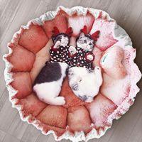 Chats lit petits chiens tapis mignon princesse style rose plissé dentelle plissée aliments pour animaux de compagnie pétale chat maison cordon ajustable
