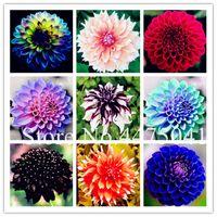 가장 잘 팔리는! 100PCS / 로트 멀티 컬러 달리아 분재 식물 씨앗 아름다운 다년생 달리아 꽃 장식 식물 DIY의 홈 정원 자연