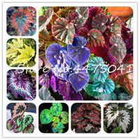200 PC를이 coleus 꽃 분재 식물 씨앗 일본 레인보우 다년생 실내 아름다운 단풍 정원 코트 야드 발코니 테라스 장식용 식물