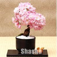 New Bonsai Tree Japanese Sakura bonsai seeds 50 pcs Colorful Cherry Blooming Plants For Home & Garden Beautiful Flowers Shipping