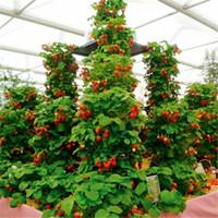 100 stücke Klettern Erdbeersamen Big Strawberry Tree 100% True Indoor Organic Sehr Köstliche Obst Samen Für Hausgarten Bonsai Samen