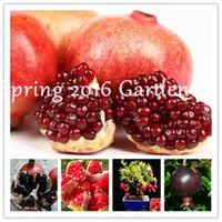 50 PC를 희귀 블랙 석류 씨앗, 분재 석류 즙 나무 맛있는 과일 홈 정원은 실내 또는 야외 화분