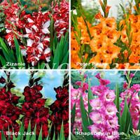 200 PCS Semillas Rayas Rayas Gladiolus Sword Lily Garden Plant Flowers Orchid Gladiolus Bonsai Plant Gandavensis Alta tasa de supervivencia