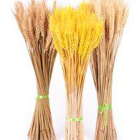Satın Al 50 Adet Grup Doğal Kurutulmuş Buğday çiçekleri Ev Dekor
