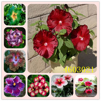 300 PCs / Bolso Hibiscus Flower Semillas Planta Hibiscus Bonsai Flor Flor China Rose Planta MEZCLA COLORES PARA ELEGIR PLANTE PARA EL JARDÍN HOME
