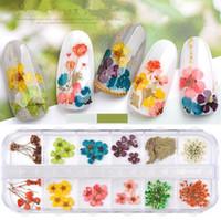 12 colori stella sole fiore piccola margherita 12 colori fiori secchi decorazione 24 fiori secchi per unghie 3 set
