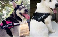 perro transpirable correas gato correos de nylon del gato del perro Ropa Inventos para Mascotas de formación de malla