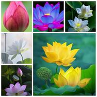 5 PCS GRAINES BOISSE MIXTE BOISSE DE FLEURS AQUAIRE AQUARIUM AQUARIOS Plant Piscine Fleur Bonsaï pour la décoration de jardin 99% Taux de germination