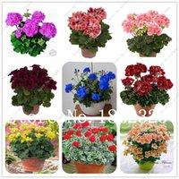 100 Pieces várias cores Geranium Bonsai vaso Varanda Plantio Sazonal Geranium em vaso Flor Bonsai Indoor