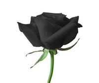 무료 배송 블랙 로즈 씨앗 (2bag / 팩) 패키지 새로운 도착 옴 브레 매력적인 정원 식물 당 50 조각의 씨앗 *
