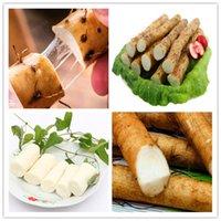 "200pcs Semillas ñame chino Bonsai ""ginseng blanco"" planta comestible raíz cilíndricos de alta nutrición saludable verde vegetales orgánicos medicinales"