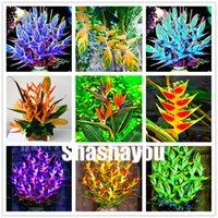 Venta caliente 500 PCS Heliconia Bonsai Seeds, Office Desktop Plantas ornamentales suculentas, absorción de radiación, planta perenne para el jardín del hogar