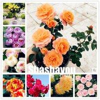 홈 정원 식물을 등반 핑크 레드 화이트 노란 장미 꽃 향기로운 4 종류 다년생 500PCS 혼합 중국어 로즈 분재 식물 씨앗